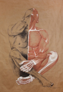 "Original Art , Male Figure - Muscle Study - Labeling in Charcoal & Conte ""MUSCLE MAN"" by Marcy Ann Villafaña"