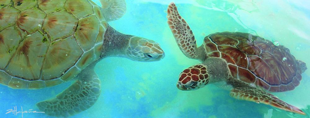 Danza de Las Tortugas - Dance of the Turtles