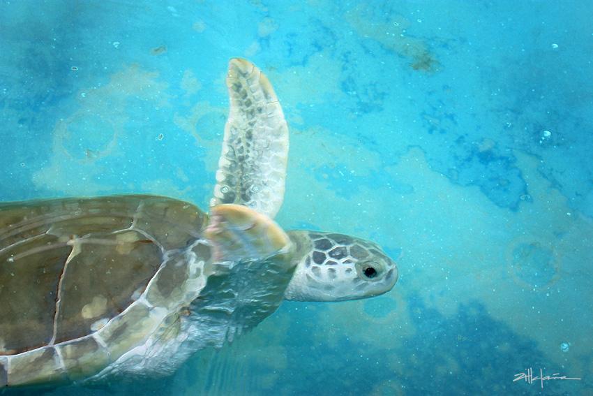 Viaje de la Tortuga - Journey of the Turtle