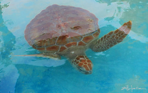 Bajo el Mar II - Under the Sea with Turtles - More turtles from the Original photos of Marcy Ann Villafana